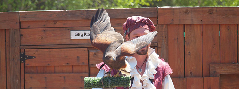 Wildlife Revealed - Tango the Harris Hawk
